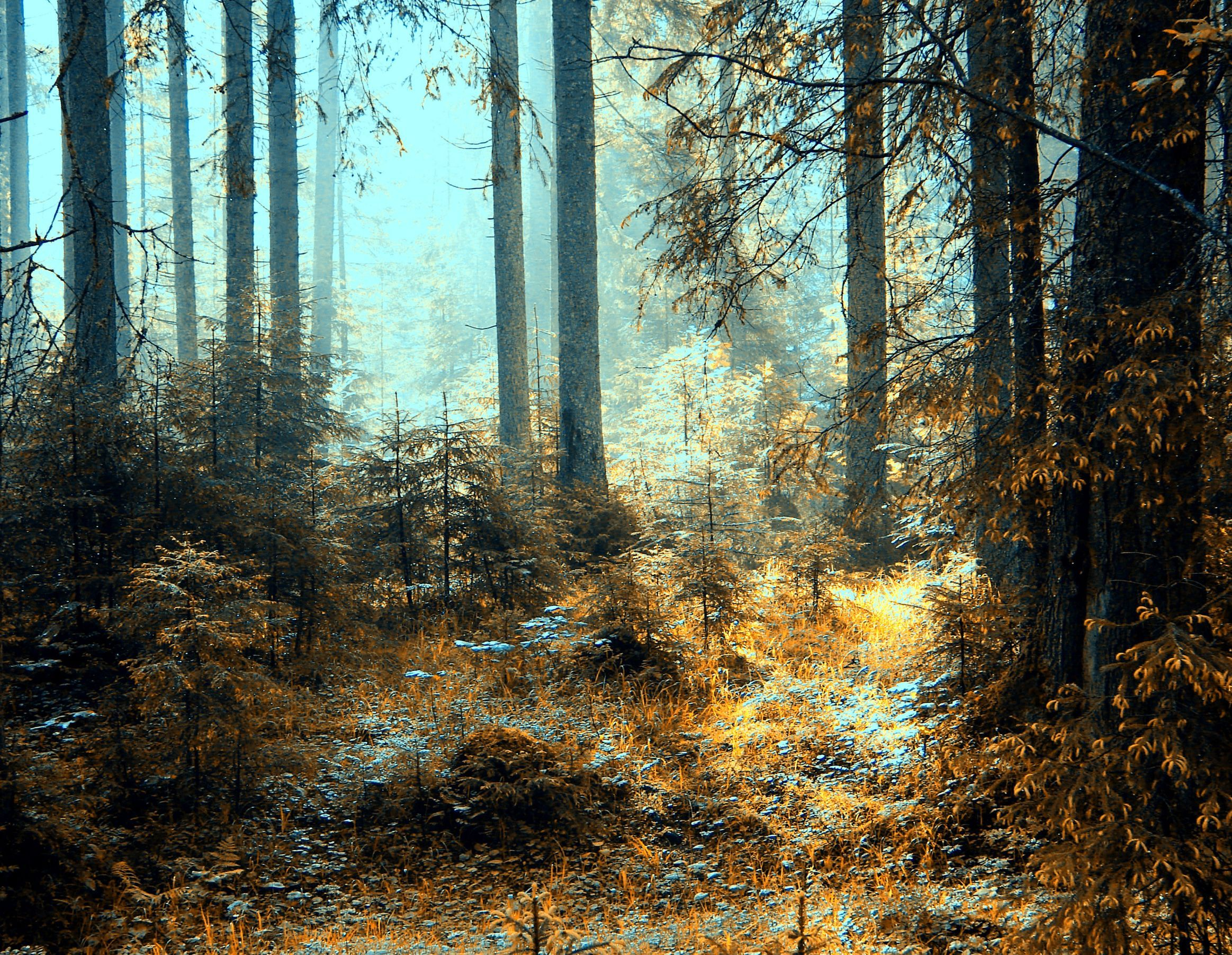 forest wallpaper android