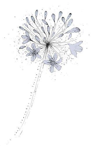 personal work allium illustration art drawing nature naturalworld flower