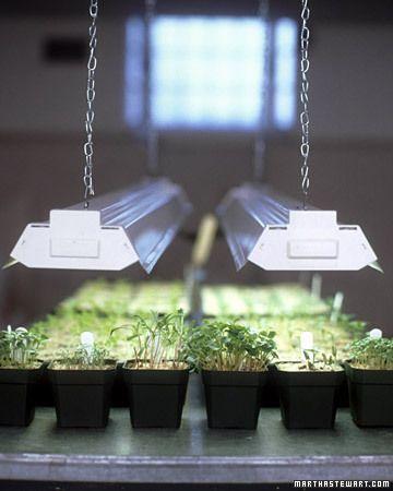 die besten 25 pflanzenlampen ideen auf pinterest pflanze wachstumsleuchte zimmergew chshaus. Black Bedroom Furniture Sets. Home Design Ideas