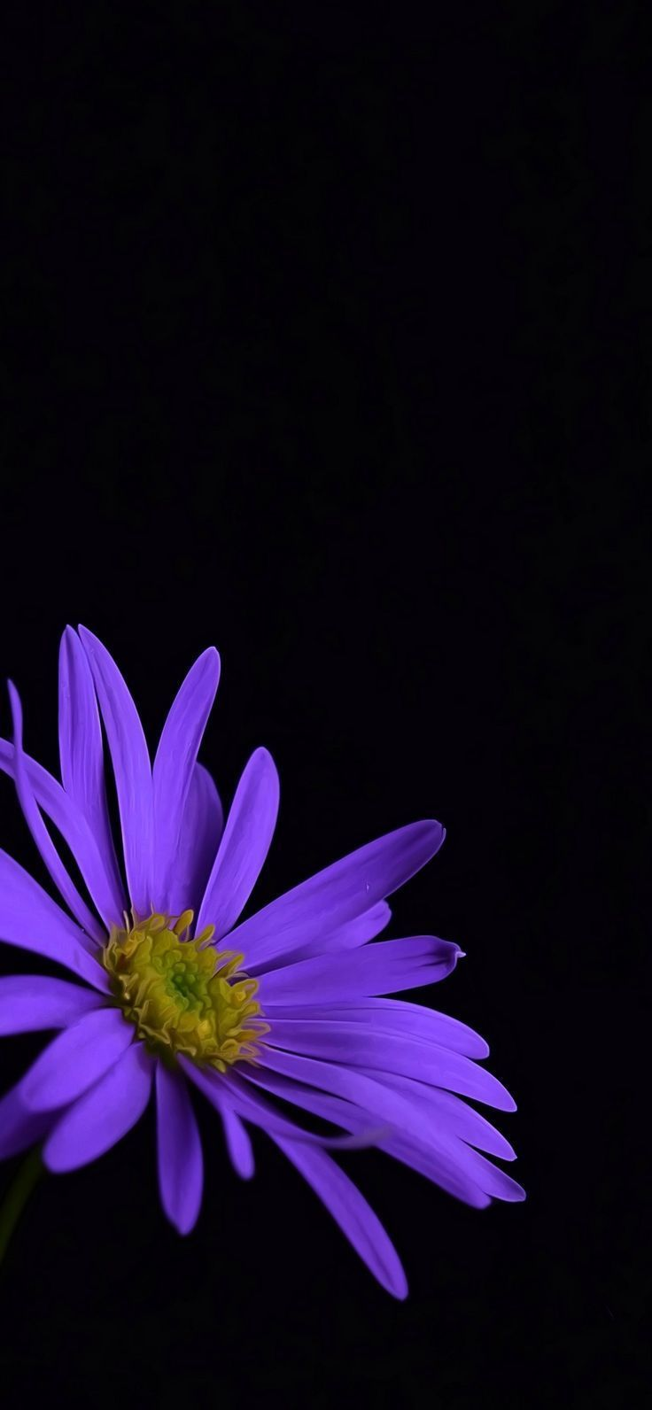Purple floral wallpaper for Iphone | 3D Wallpapers #Flower ...