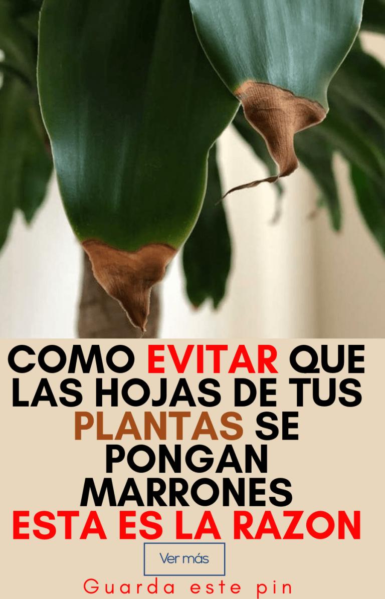 Cafe Para Las Plantas De Interior
