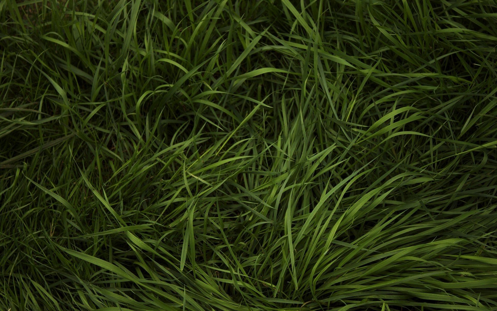 Grass Texture Wallpaper