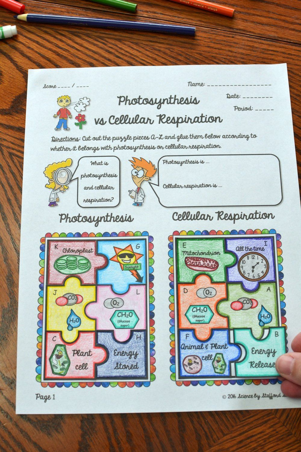 Photosynthesis vs Cellular Respiration Puzzle Activity in