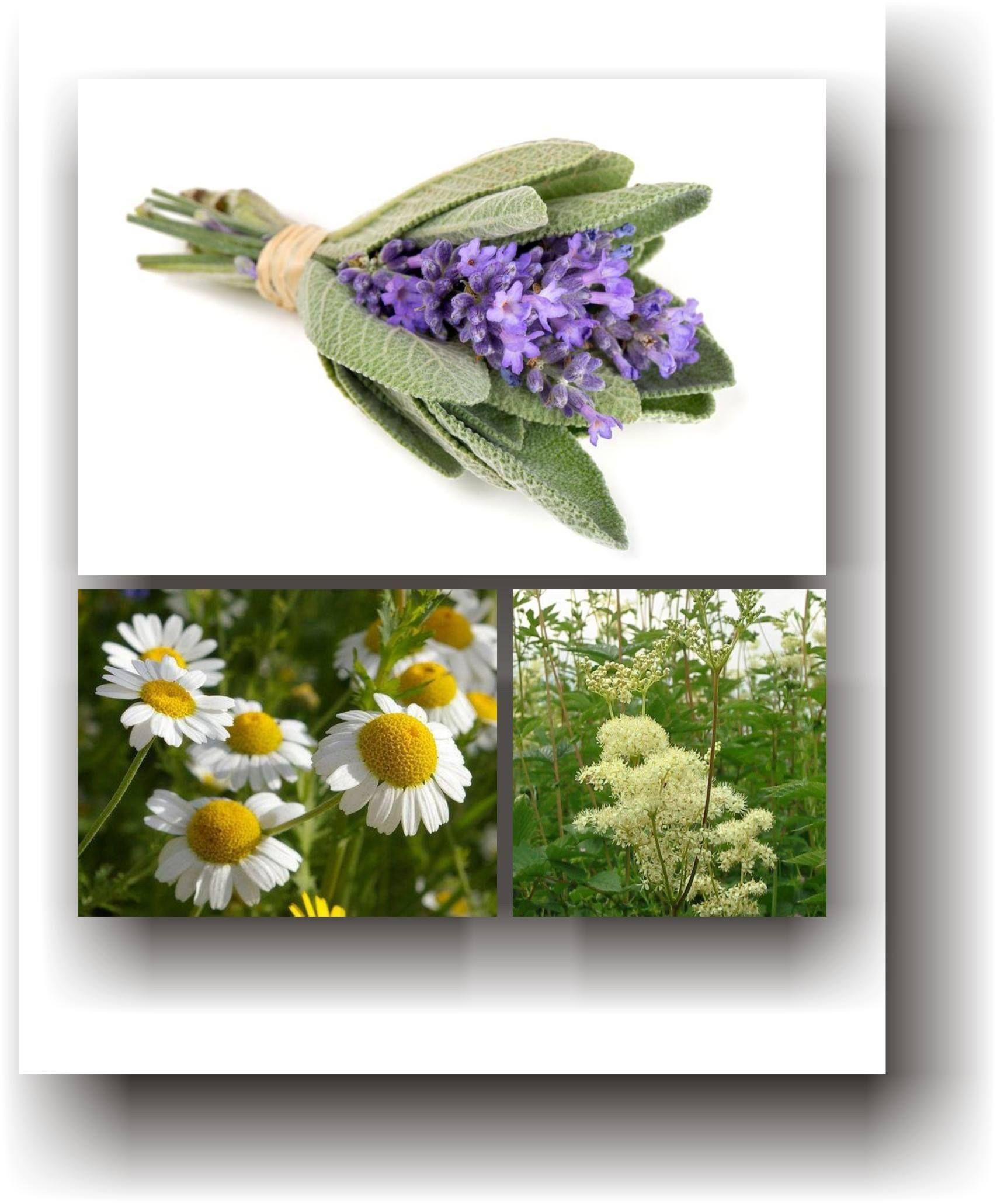 plante terapeutice din varicoză