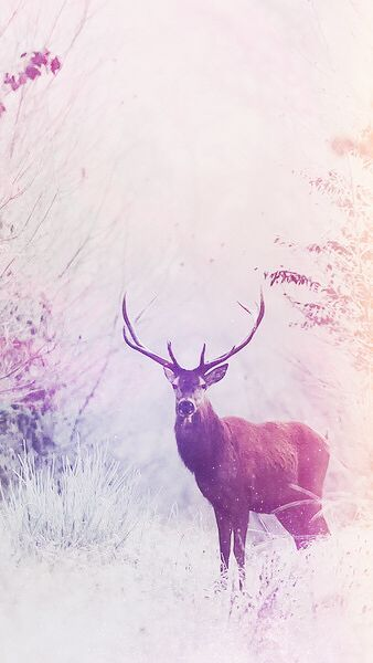 Dreaminglygraphics Deer Wallpaper Iphone Wallpaper Animal Wallpaper