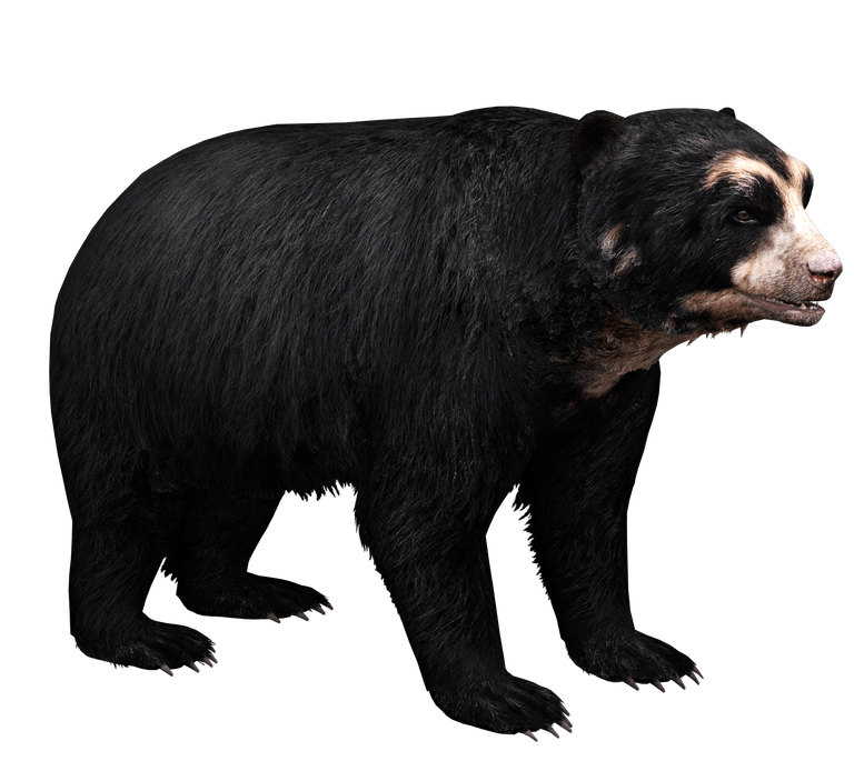 Spectacled Bear Aurora Designs Zt2 Download Library Wiki Fandom Powered By Wikia Spectacled Bear Aurora Design Bear