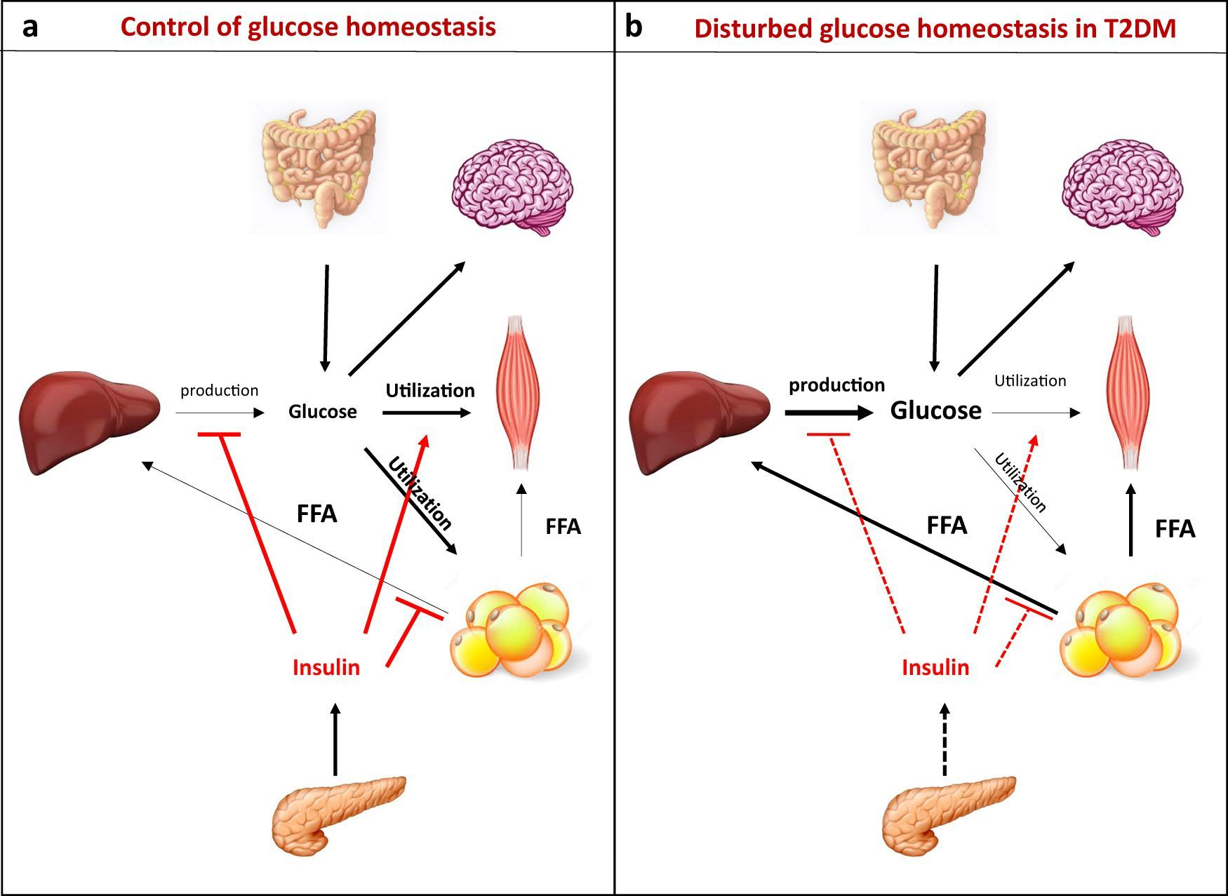 Homeostasis Pictures