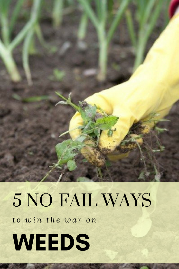 nofail ways to win the war on weeds gardensweed control