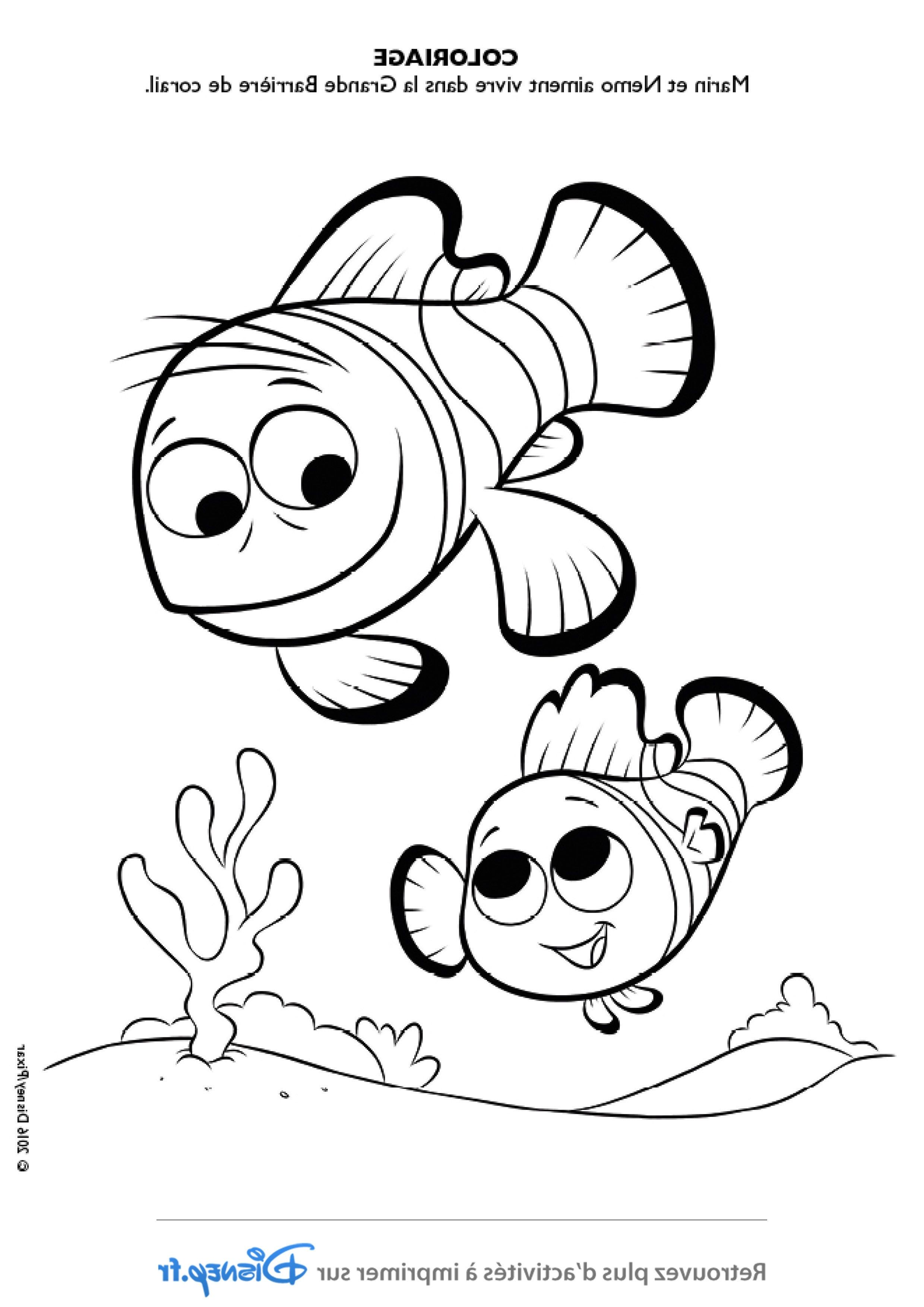 13 Adorable Coloriage Dory Collection Coloriage Animaux