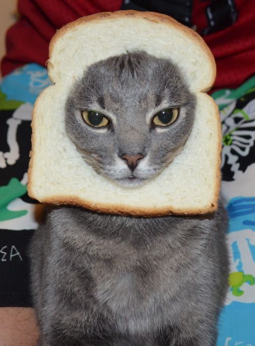 sandwich loaf a breaded cats