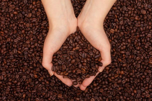 coffee beans in womens hands on coffee beans background