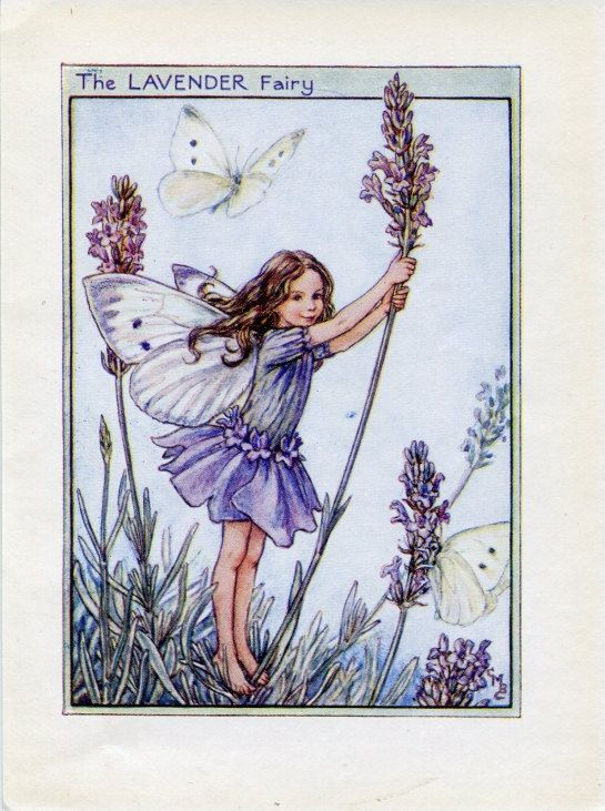 Lavender Flower Fairy Vintage Print C 1950 By Flowerfairyprints Flower Fairies Books Vintage Fairies Flower Fairies