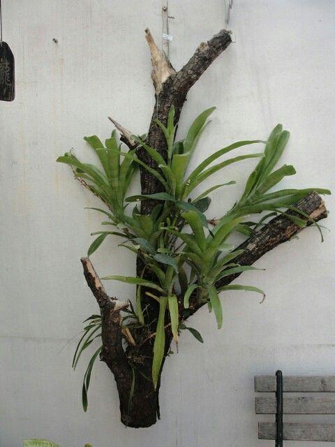pin de delane almeida en orquideas | pinterest | mi mundo