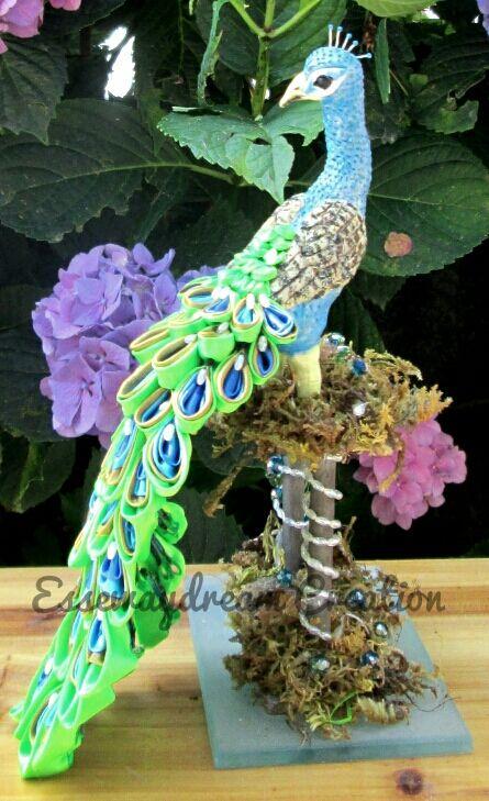 peacock 17