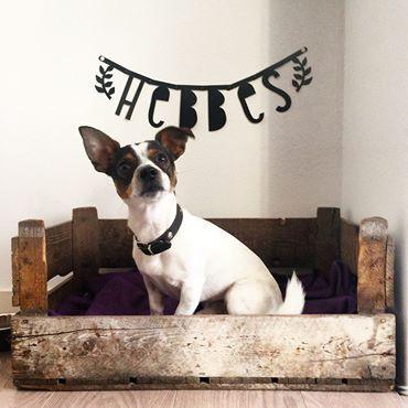 #Wordbanner #tip: Hebbes, the name of the dog - Buy it at www.vanmariel.nl - € 11,95, 2 for € 20