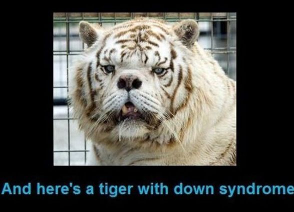 Down Syndrome Tiger Well That S Fun Pinterest