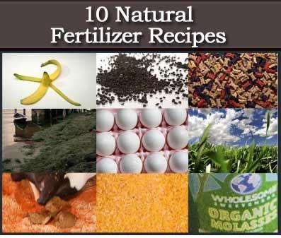 10 Natural Homemade Organic Fertilizer Recipes Garden Fertilizer