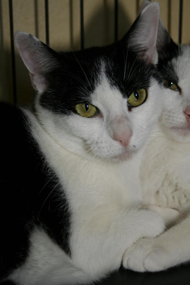 I found Molly & Jace on | Animal and Cat
