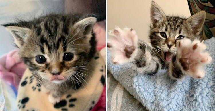 Stray Kitten Found Alone On The Street Finds A Friend To Cuddle Love Meow In 2020 Tabby Kitten Cat Leash Kittens
