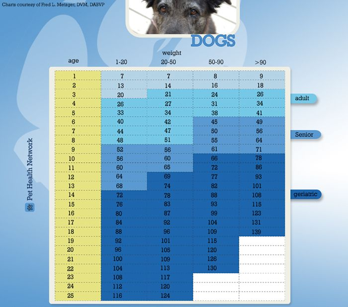 How Old Is Your Dog In People Years Dog Weight Dogs Dog Health