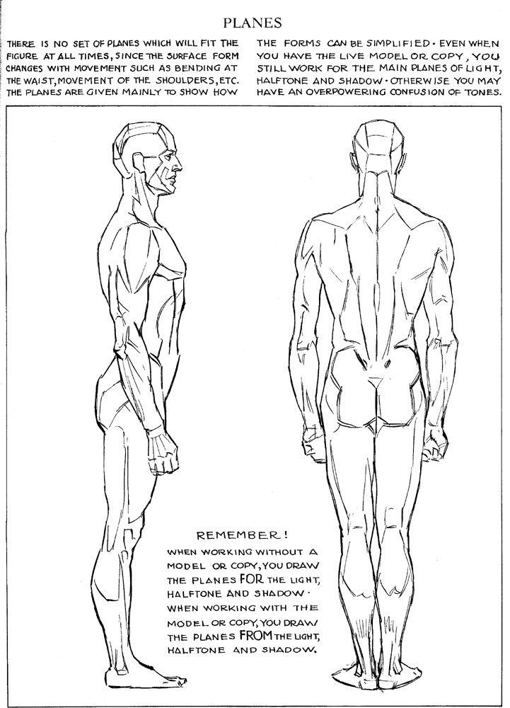 Orthographic Planes Anatomia Anatomy Anatomy Reference Human