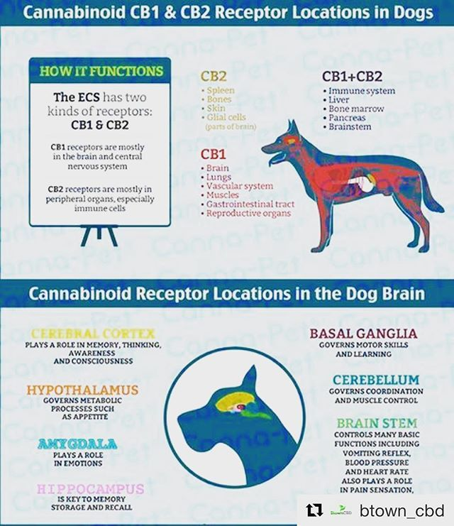 cbd hemp oil for dogs you bet cbd hemp oil is used for both humans and animals check it out here