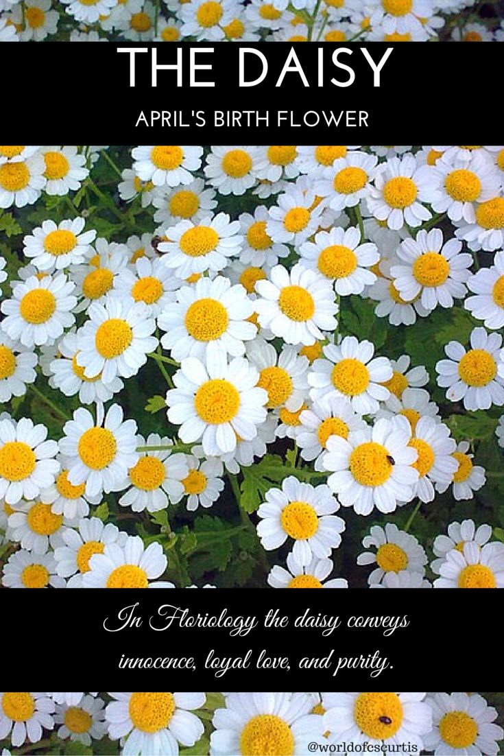Daisy April Birth Flower Some Months Have More Than One Flower