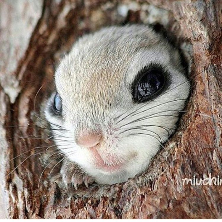Cornelia Guest On Instagram I Just Love This Little Face Photo Miuchin0412 Corneliaguest Cute Baby Animals Animals Beautiful Baby Animals