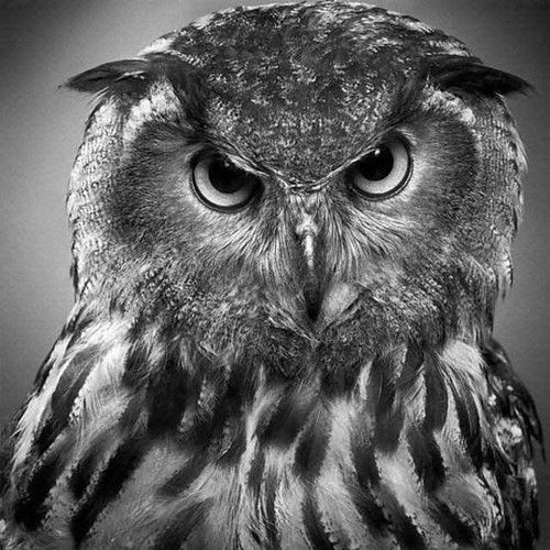 Amazing contrast for pencil drawing