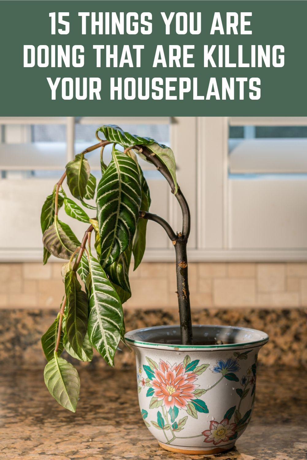15 Things You Are Doing That Are Killing Your Houseplants