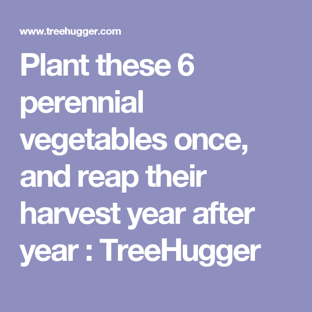 Plant these 6 perennial vegetables once, and reap their harvest year on designing a shrub garden, designing a woodland garden, designing a drought tolerant garden, designing a water garden, designing a japanese garden, designing a terrace garden, designing a shade garden, designing a lily garden, designing a wildlife garden, designing a vegetable garden, designing a herb garden, designing a pollinator garden, designing a fairy garden, designing a butterfly garden, designing a fruit garden, designing a cactus garden, designing a flower garden, designing a container garden, designing a fern garden, designing a succulent garden,