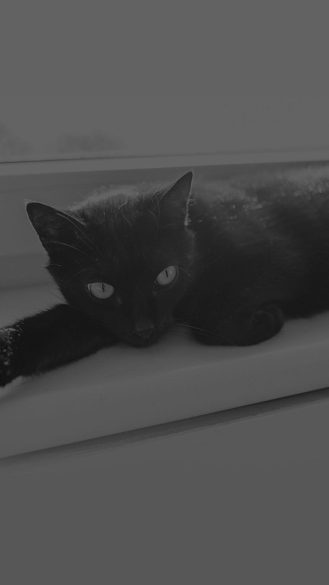 Black Cat Animal Cute Watching Dark Bw iPhone 6 wallpaper