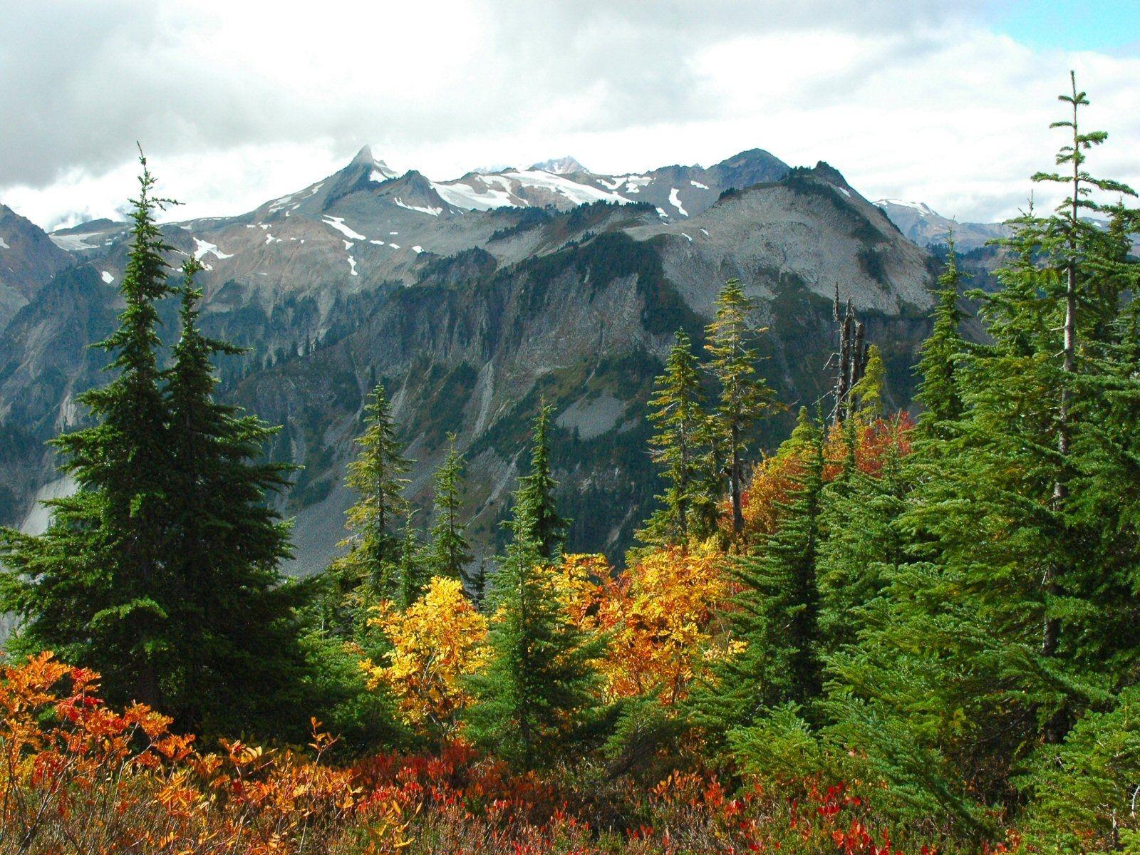 Картинки с лесом и горой