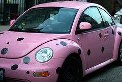 polka dot beetle
