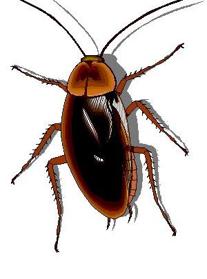 تفسير حلم الصراصير في المنام Animals Bee Insects