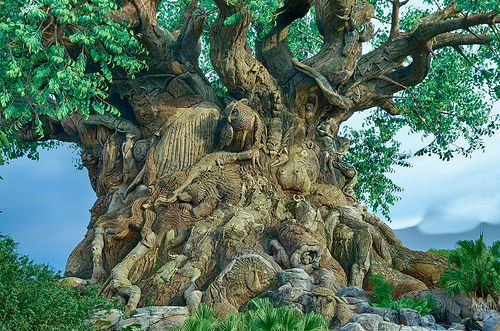 Hdr Tree Of Life Tree Of Life Artwork Tree Hd Wallpaper Animal Kingdom Disney