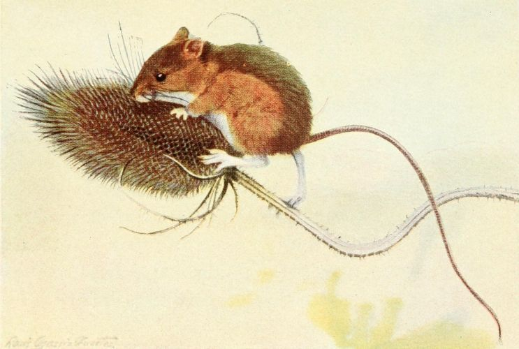 Fuertes, Louis Agassiz (1874-1927) - Burgess Animal Book for Children 1920 (Jumping Mouse).