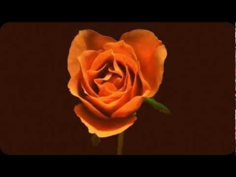 24 Music Ideas Music Max Richter Leonard Cohen