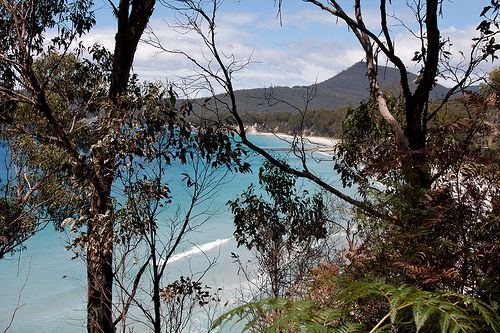 the gorgeous beach at adventure bay, bruny island, went swimming despite freezing water