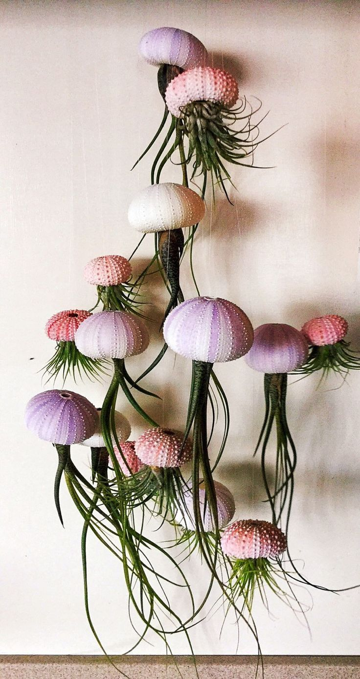 Medusa - Luftpflanzen (Tillandsien) im Seeigel. So wie auf dem Foto zu sehen, wird die Pflanze kopfüber mit einem Nylonfaden aufgehängt. Dadurch wirkt es als würde die Pflanze in der Luft schweben. Mit dem Seeigelskelett als Kopf ähnelt sie einer Qualle. Sie macht sich super als Fensterschmuck, entweder einzeln oder mehrere zusammen. #purpleweddingflowers