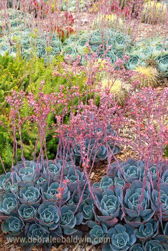 Oasis Water Efficient Gardens Nursery