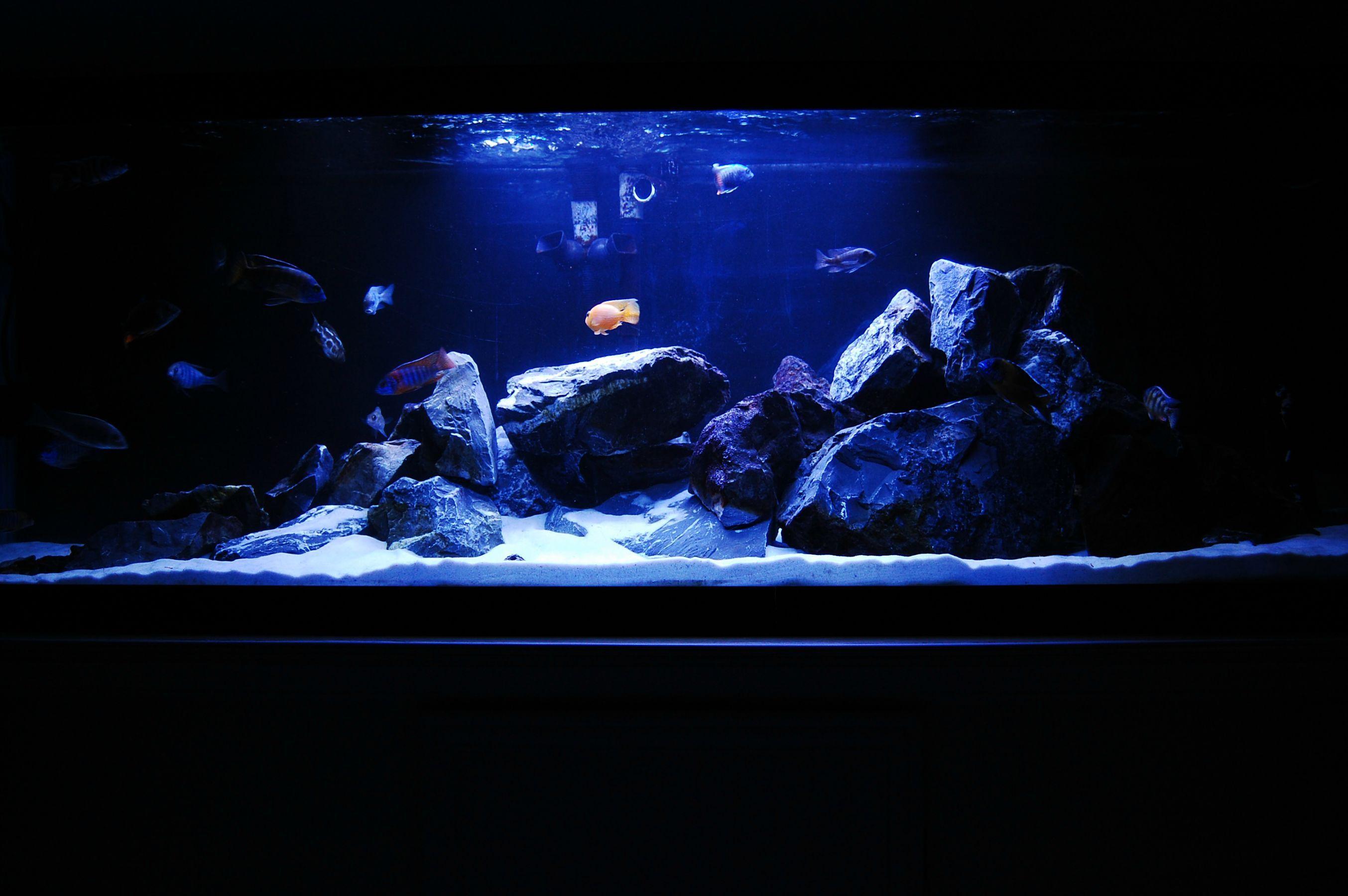 0d72c39b402dd5caca041354e2acd48e Frais De Aquarium original Des Idées