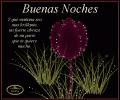 Imágenes con mensajes de buenas noches para el facebook | Frases de Amor | Imagenes bonitas | Frasesparaelamor.com