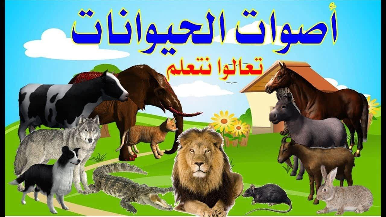 تسمع الصراصير من ركبها ومعلومات مذهلة عن أصوات الحيوانات Movie Posters Poster Art