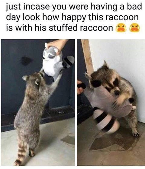 35 Hilarious Memes Guaranteed To Make You Laugh Cute Animals Cute Baby Animals Funny Animal Pictures