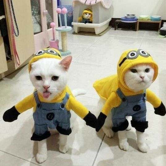 this hilarious minions costume is adorable in person and will make your cat and dog look hilariously cute available in 4 sizes no matter what size