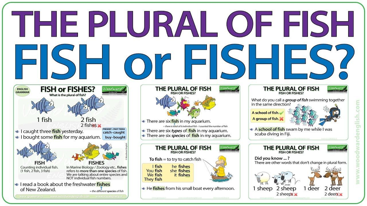 The Plural Of Fish Fish Or Fishes Plurals Learn English Simple Present Tense