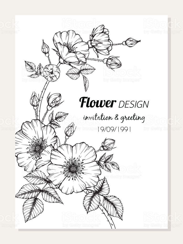 Rose Flower Frame Drawing Illustration For Invitation And Greeting Card Design Royalty Free Rose Flower Fr Flower Drawing Drawing Illustration Floral Botany