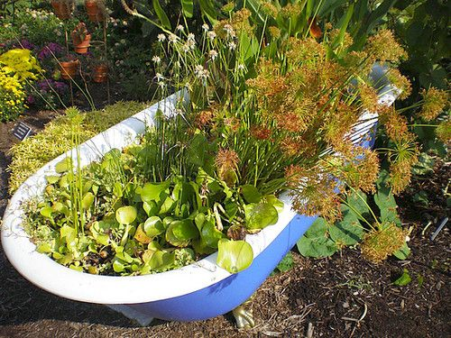 47 best ideas about water garden tub on Pinterest Gardens Pump