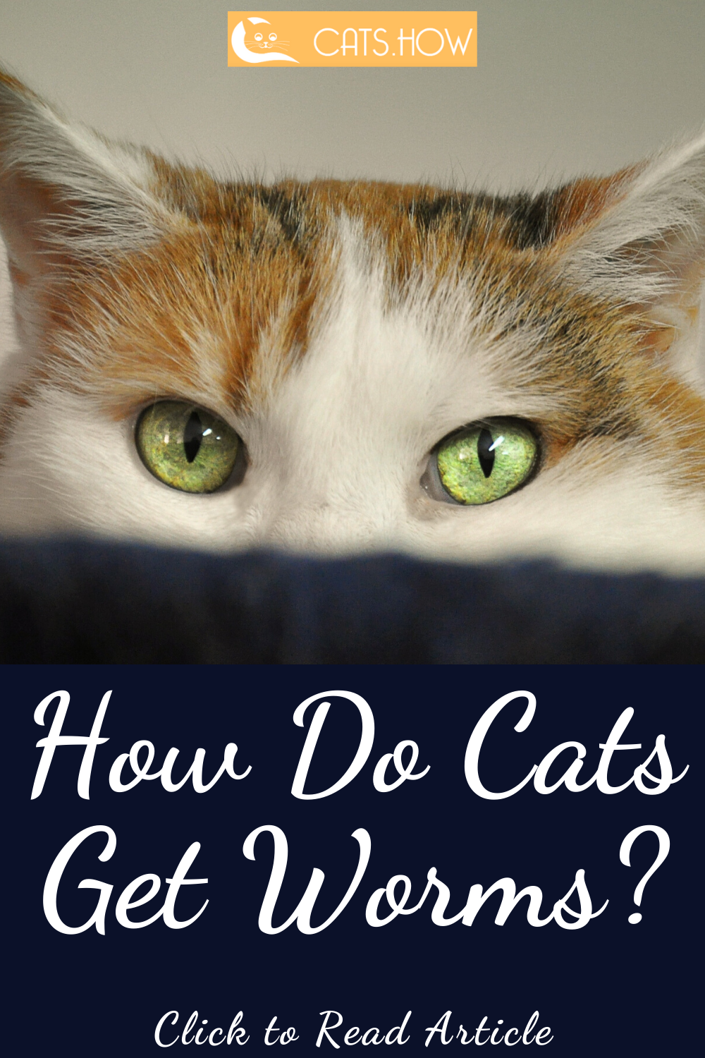 How Do Cats Get Worms In 2020 Cat Care Cat Care Tips Cats